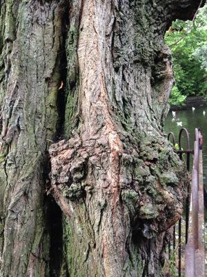 DublinFacesInTrees
