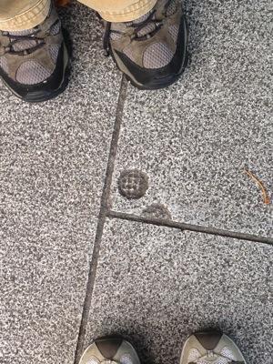 DublinSidewalkMystery3
